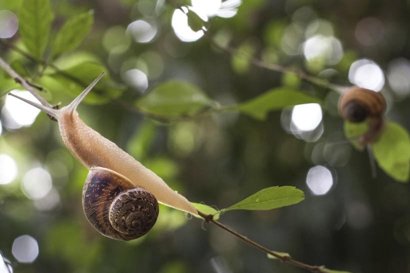 snail-1597846_1920