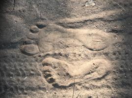 Tracks of the wild human